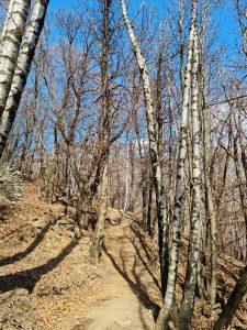 Walking through the woods on the way to ponte Tibetano