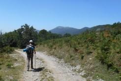 Descending on a larger forest track