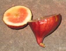 Palermo Red: Malta Purple Red (sugar)