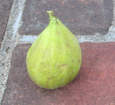 Cucumber (LDA) (5) (973x895)