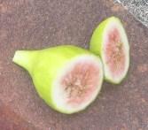 Kadota breba (4)