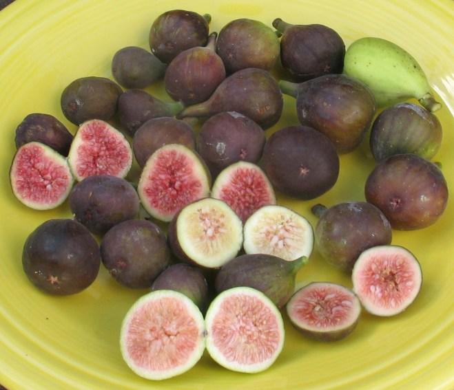 27-figs-mt-etna-brooklyn-white-lsu-purple-black-madeira-3