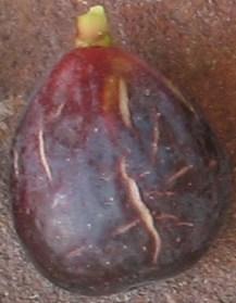lsu-purple-36
