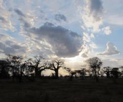 Tarangire-Sunset