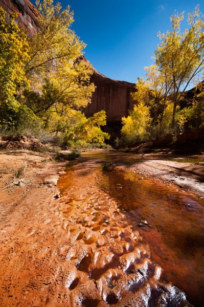 Cottonwoods and Water, Coyote Gulch, UT