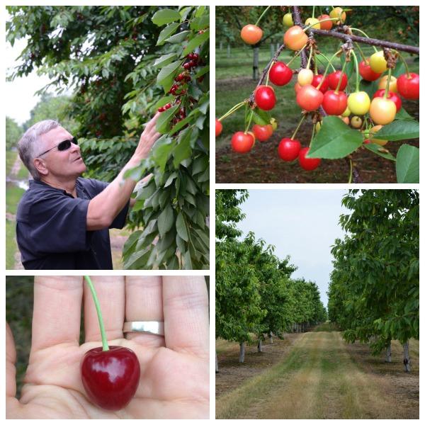 Mission Fruit Company, #stateofgreattaste, www.mountainmamacooks.com
