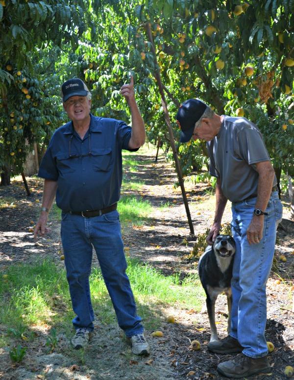 John-Cliff-Starn-Peach-Orchard-Del Monte-Tour-2013