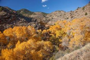 Bear Creek Canyon (DMP) between Mt. Falcon and Bear Creek (JCOS).