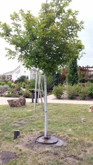 watering tree 3