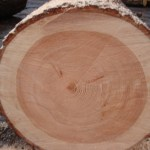 Log Cabin Log Type Douglas Fir