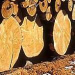 Log Cabin Log Type White Cedar
