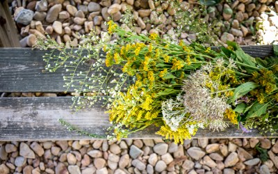 Intro to Herbal Medicine & Intro to Herbal First Aid