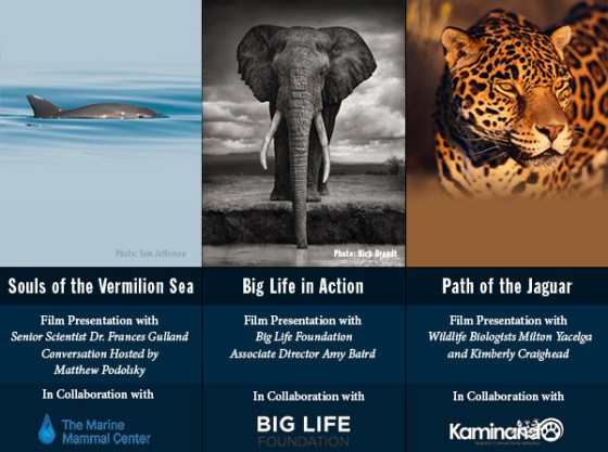 What do the Vaquita Porpoise, Jaguar and Elephant Have in Common?