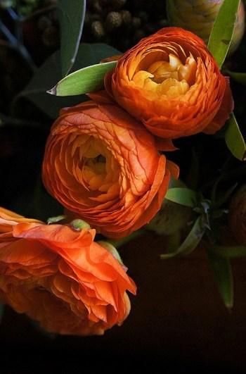 5b Orange Ranunculous Pantone Fall 2017 Autumn Maple 500