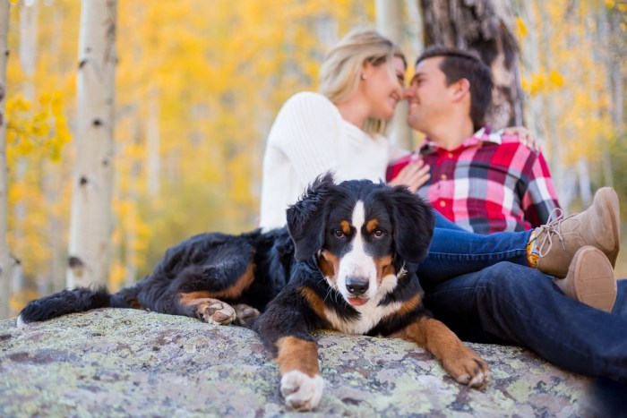 14 Fall Engagement In Vail Colorado Bergreen Photography Via MountainsideBride