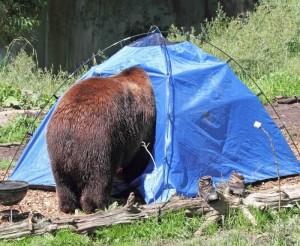 image via Woodland Park Zoo