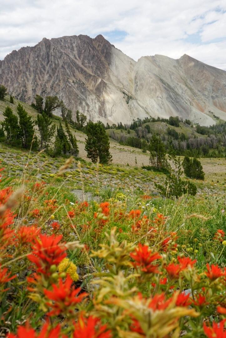wildflowers in chamberlain basin