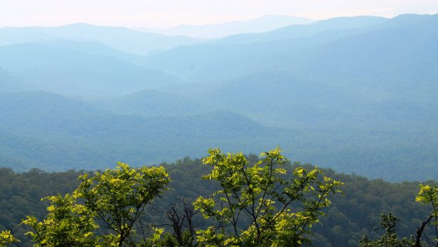 Image result for trees of blue ridge mountains