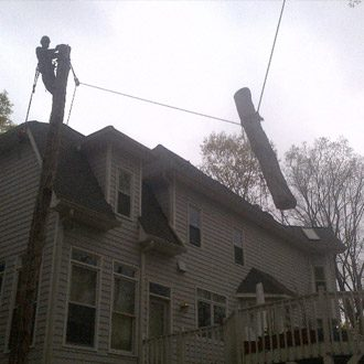 Man Removing a tree that is close to a residence
