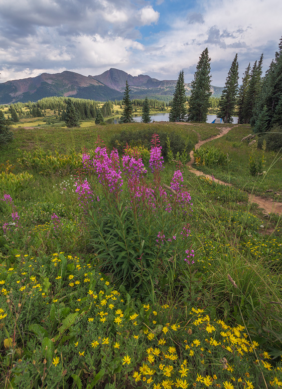 little molas lake wildflowers colorado