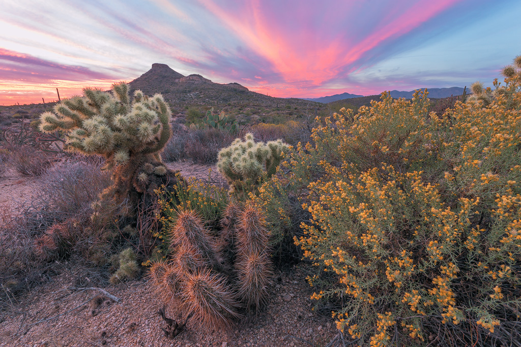 wildflowers sunset scottsdale arizona mcdowell