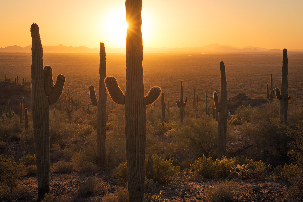 picacho peak saguaro sunset