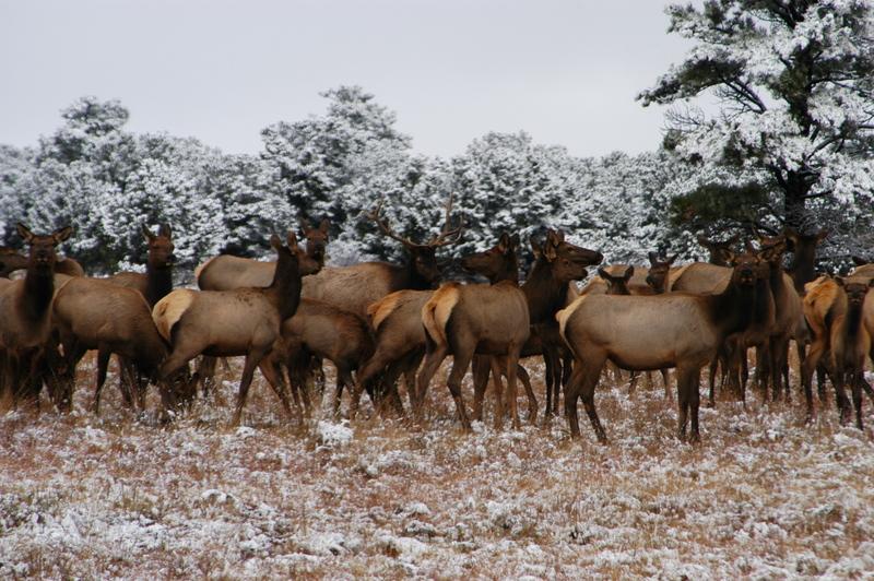 Watching the herd
