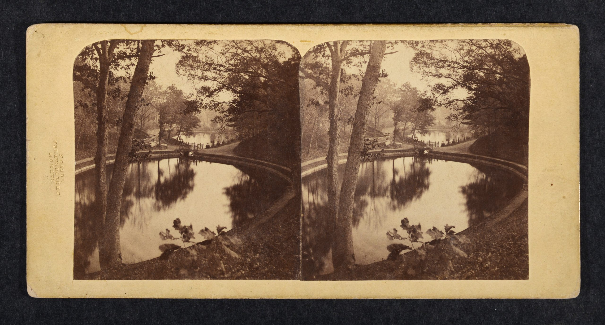 Stereoview of pond with foreground tree and plants, water reflecting trees.