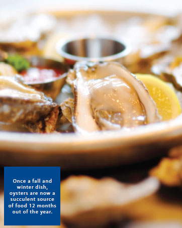 Once a fall and winter dish, oysters are now a succulent source of food 12 months out of the year.