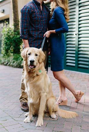 Moose the Golden Retriever, Jonathon Ashley and Jordan Jaime - East Cooper Pets