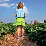 Boone Hall Farms' U-Pick Fields: Spring's Iconic Red Berry is Back