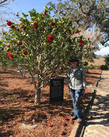Master Gardener Catherine Burrous stands next to a Camellia tree at Boone Hall.