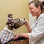 Advanced Animal Care: Pawsitive Veterinary Services