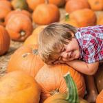 Boone Hall Pumpkin Patch: Something Fall for All
