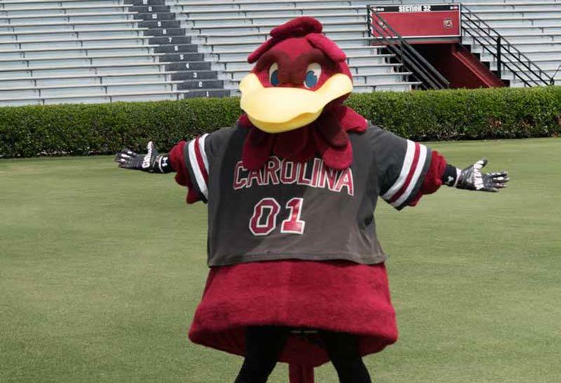 USC Gamecock's Mascot - Cocky
