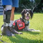 How Veterans Benefit From a Calming Relationship with Service Animals