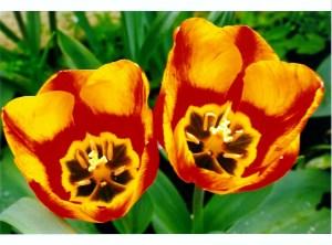 Flowers by Fiona Phelan