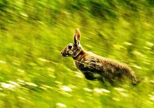 Speed by Lori Strang