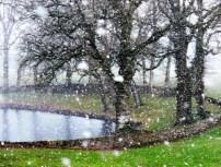 Winter Wonderland by Kate Wood