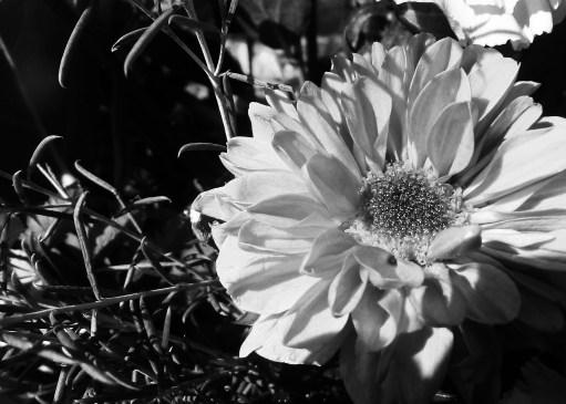 Black & White - Nature