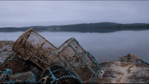 Cages à crustacés