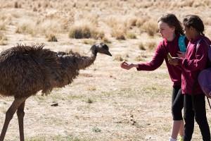 """A scene from Imogen Thomas' """"The Emu Runner"""""""