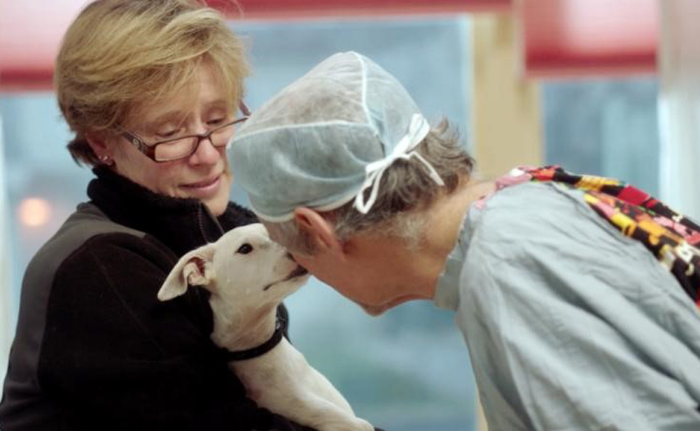 """A scene from Cindy Meehl's """"The Dog Doc"""""""