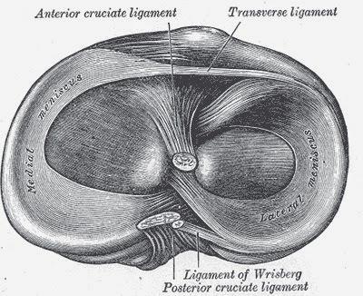 meniscustop
