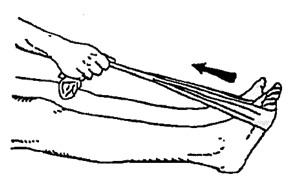 ankledorsiflexion
