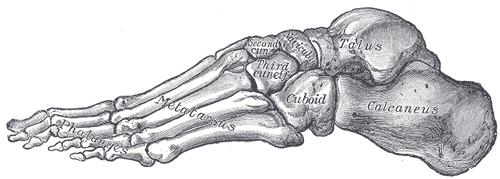 footgrayslateral