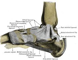 footmedial