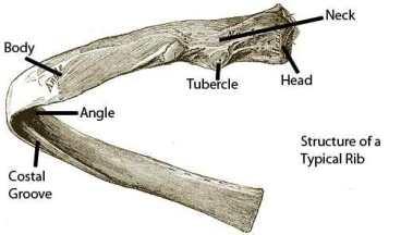 ribsingledetail