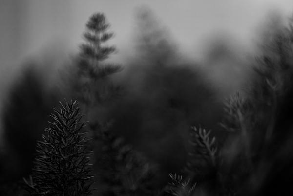 wpid-Macro__TreesApril_13__2013.jpg