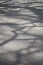 wpid-shadows__sunlightApril_03__2013.jpg